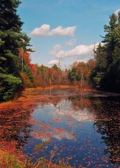 Autumn Greeting Card featuring the photograph Autumn Reflections by Joann Vitali