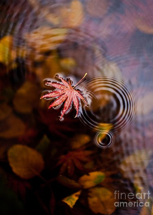 Fall Greeting Card featuring the photograph Autumn Ripples by Mike Reid