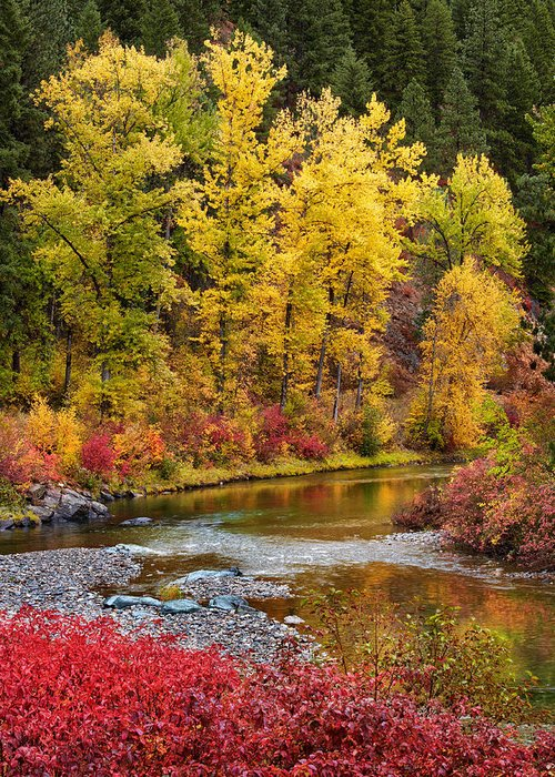 Montana Greeting Card featuring the photograph Autumn River by Mary Jo Allen