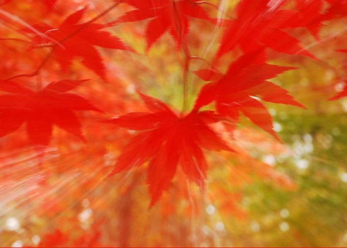 Autumn Greeting Card featuring the photograph Autumn Rush by Penny Parrish