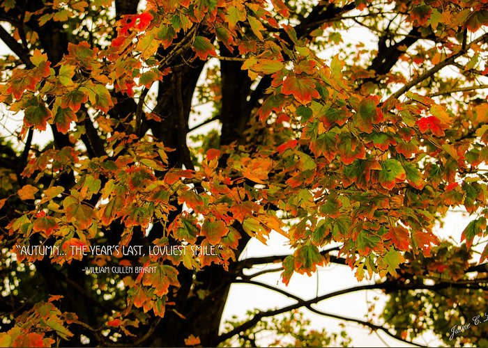 Fall Greeting Card featuring the photograph Autumn Smile by Jaime Lind