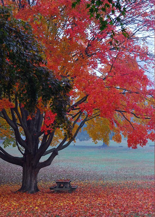 Autumn Splendor Greeting Card featuring the photograph Autumn Splendor by Lisa Phillips