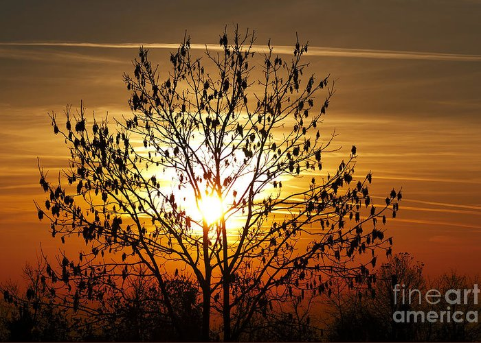 Autumn Greeting Card featuring the photograph Autumn Tree In The Sunset by Michal Boubin