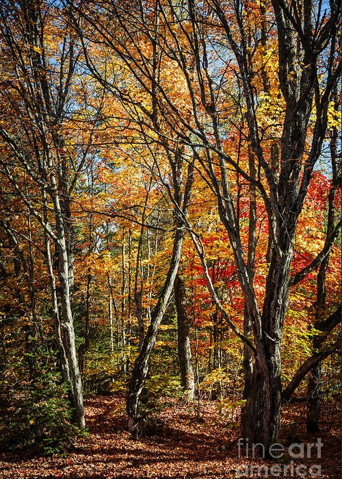 Fall Greeting Card featuring the photograph Autumn Trees by Elena Elisseeva