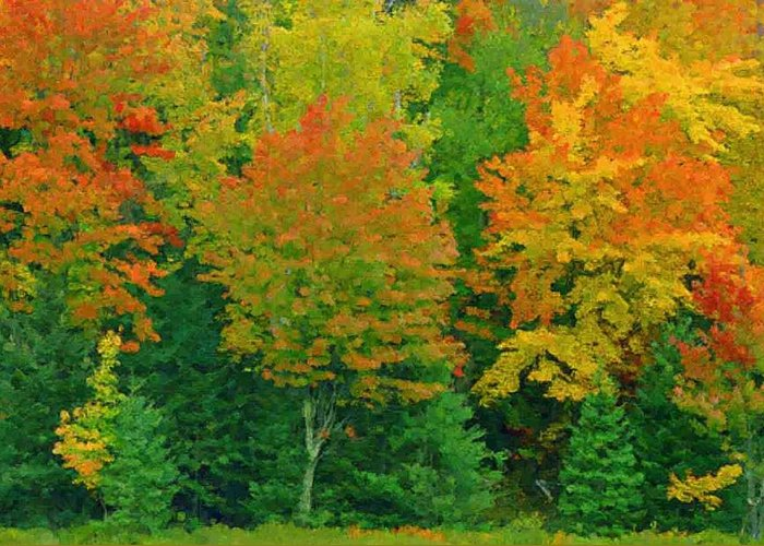 Landscape Image Of Autumn Colored Trees Greeting Card featuring the photograph Autumn Trees by Pat Now