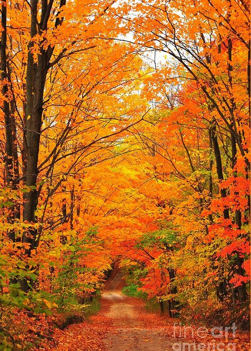 Autumn Greeting Card featuring the photograph Autumn Tunnel Of Trees by Terri Gostola