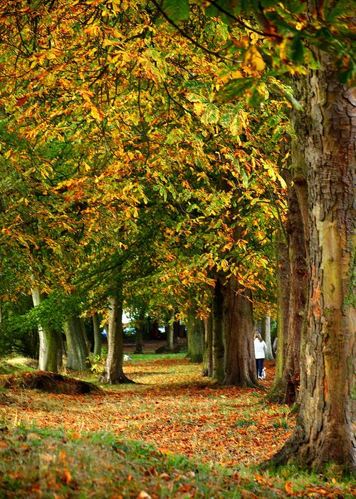 Walk Greeting Card featuring the photograph Autumn Walk by Susan Tinsley