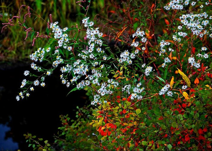 Wildflowers Greeting Card featuring the photograph Autumn Wildflowers by Bill Jonscher
