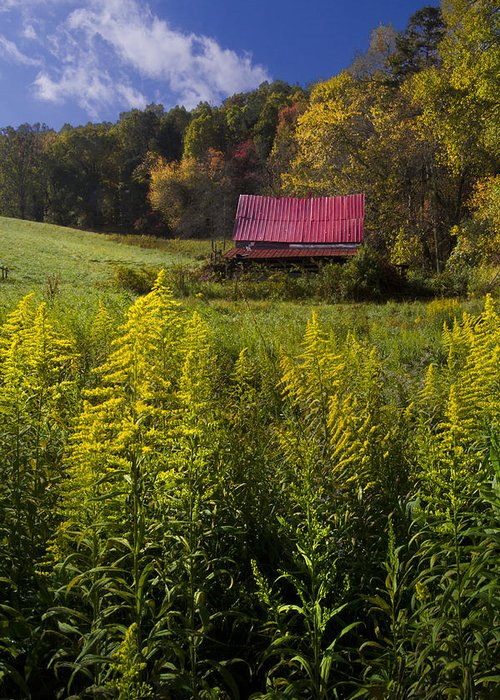 Barn Greeting Card featuring the photograph Autumn Wildflowers by Debra and Dave Vanderlaan