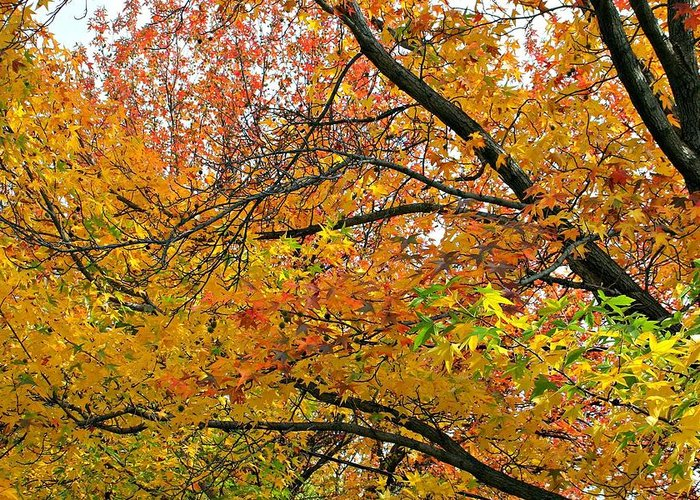 Nature Greeting Card featuring the photograph Autumnal Bliss by Cindy White