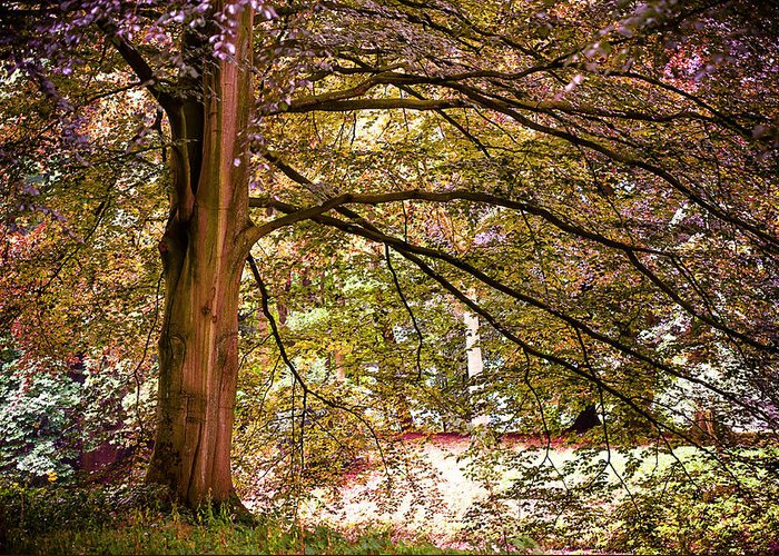 Utrecht Greeting Card featuring the photograph Autumnal Colors In The Summer Time. De Haar Castle Park by Jenny Rainbow