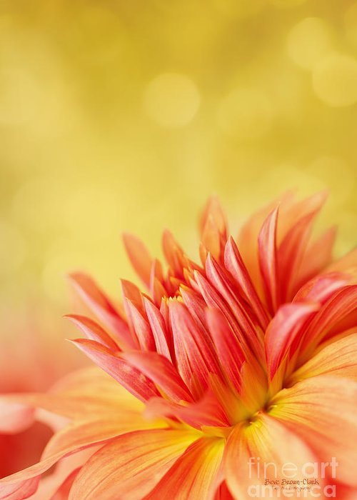 Dahlia Greeting Card featuring the photograph Autumns Calling Card by Beve Brown-Clark Photography