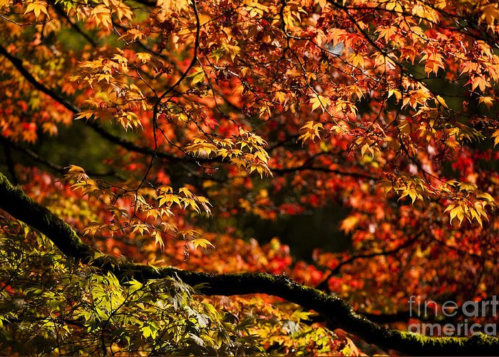 Annegilbert Greeting Card featuring the photograph Autumn's Glory by Anne Gilbert