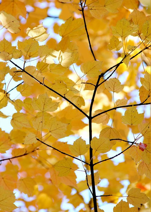 Leaf Greeting Card featuring the photograph Autumn's Golden Leaves by Jennie Marie Schell