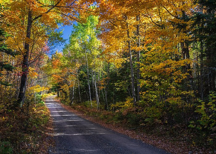 Fall Greeting Card featuring the photograph Autumns Road by Kevin Clifford