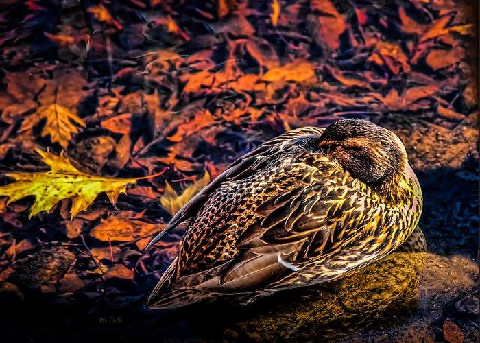 Mallard Greeting Card featuring the photograph Autumns Sleepy Duck by Bob Orsillo
