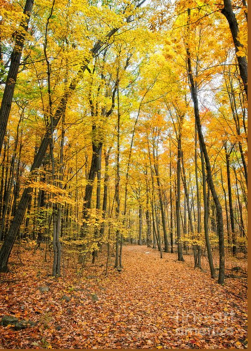 Fall Greeting Card featuring the photograph Autumn's Splendor by Claudia Kuhn