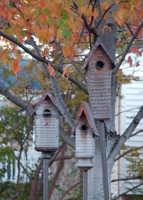 Birdhouse Greeting Card featuring the photograph Awaiting Spring by Suzanne Gaff