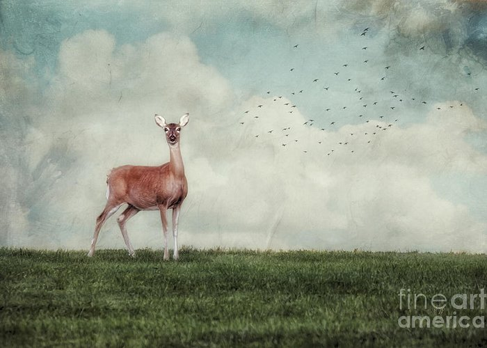 Deer Greeting Card featuring the photograph Aware by Lois Bryan