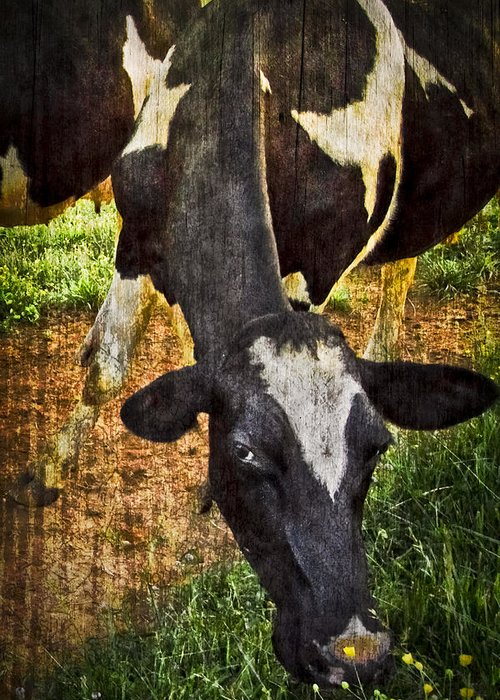 Appalachia Greeting Card featuring the photograph Awww Shucks by Debra and Dave Vanderlaan