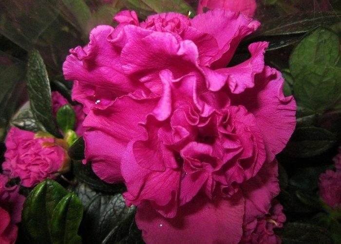 Flowerromance Greeting Card featuring the photograph Azalea by Rosita Larsson