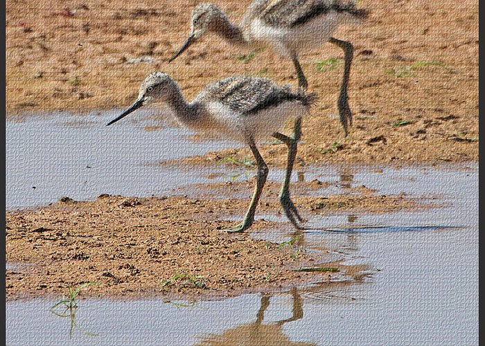 Baby Avocets At Grp Greeting Card featuring the photograph Baby Avocets At Grp by Tom Janca