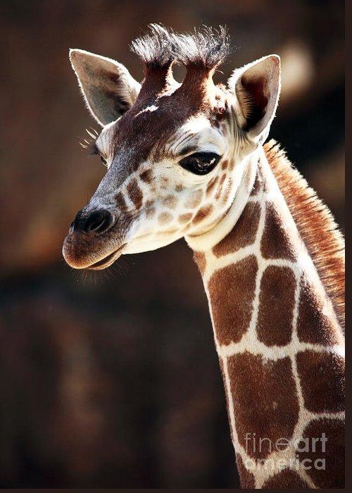 Baby Giraffe Greeting Card featuring the photograph Baby Giraffe by John Rizzuto
