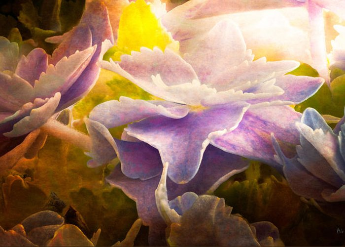 Hydrangea Greeting Card featuring the photograph Baby Hydrangeas by Bob Orsillo