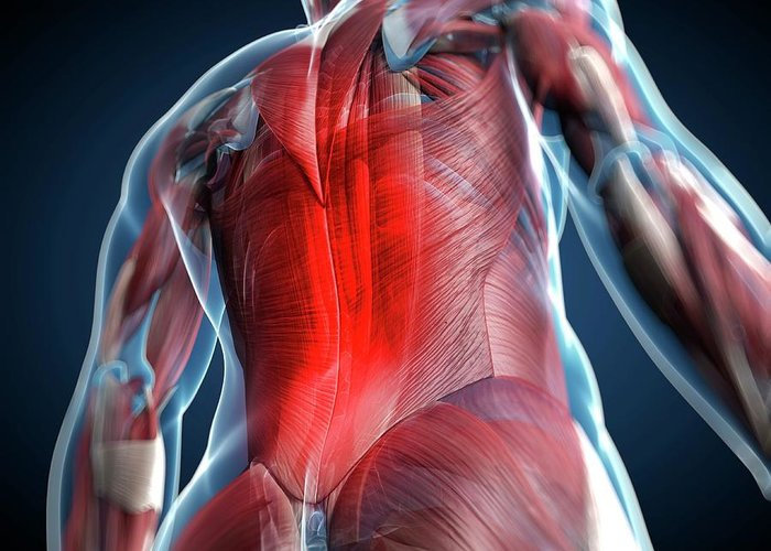 Physiology Greeting Card featuring the digital art Back Pain, Conceptual Artwork by Science Photo Library - Sciepro