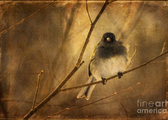 Bird Greeting Card featuring the photograph Backlit Birdie Being Buffeted by Lois Bryan