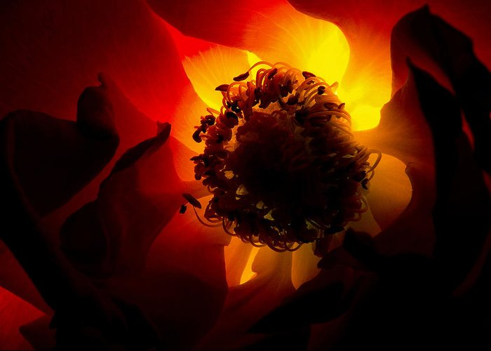 Nature Greeting Card featuring the photograph Backlit Flower by Fabrizio Troiani