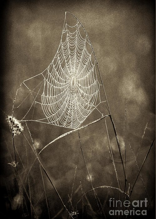 Wildlife Greeting Card featuring the photograph Backlit Spider Web In Sepia Tones by Dave Welling