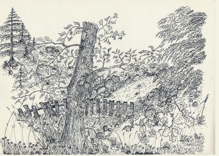 Fence Greeting Card featuring the drawing Backyard Peace by Carolann Van de Ligt