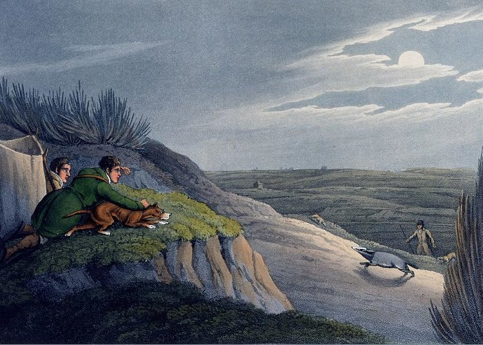 Hunt Greeting Card featuring the drawing Badger Catching, 1820 by Henry Thomas Alken