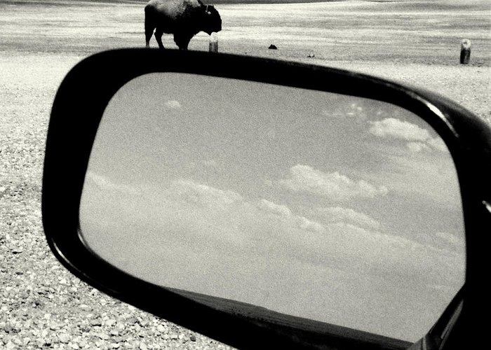 Americana Greeting Card featuring the photograph Badlands Bison Climbs Colossal Car by David Gilbert
