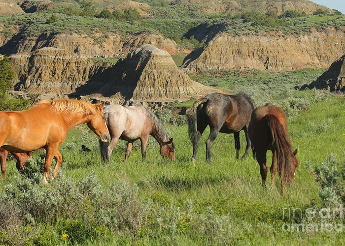 Wild Horses Greeting Card featuring the photograph Badlands Browsing by Rod Giffels