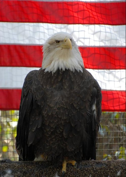 Bald Eagle Greeting Card featuring the photograph Bald Eagle 265 by Joyce StJames