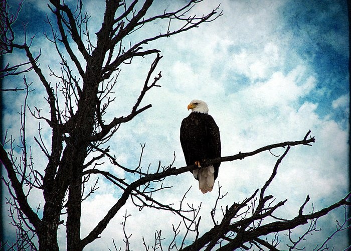 Bald Eagle Greeting Card featuring the photograph Bald Eagle by Cassie Peters