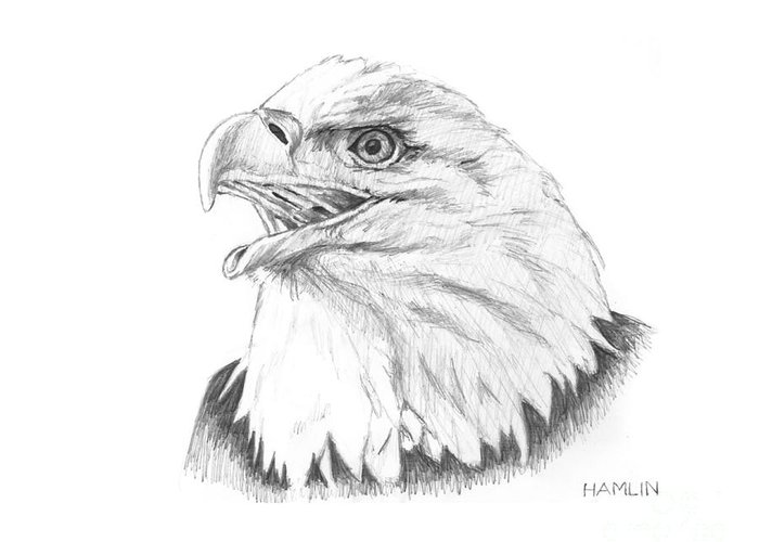 Bird Greeting Card featuring the drawing Bald Eagle by Steve Hamlin