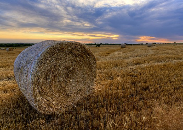 Fine Art America Greeting Card featuring the photograph Baled by Scott Bean