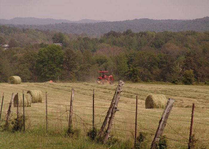 Bayling Hay Greeting Card featuring the photograph Baling Hay by Vicki Parker