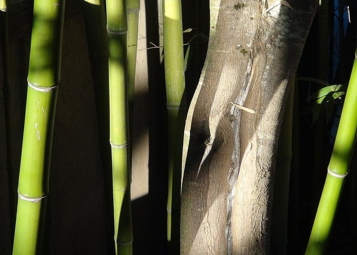 Bamboo Greeting Card featuring the photograph Bam Boo by Shawn Marlow