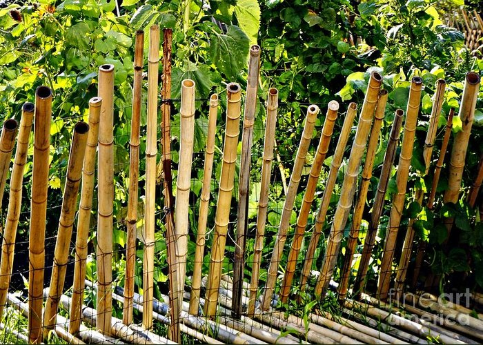 Bamboo Greeting Card featuring the photograph Bamboo Fencing by Lilliana Mendez