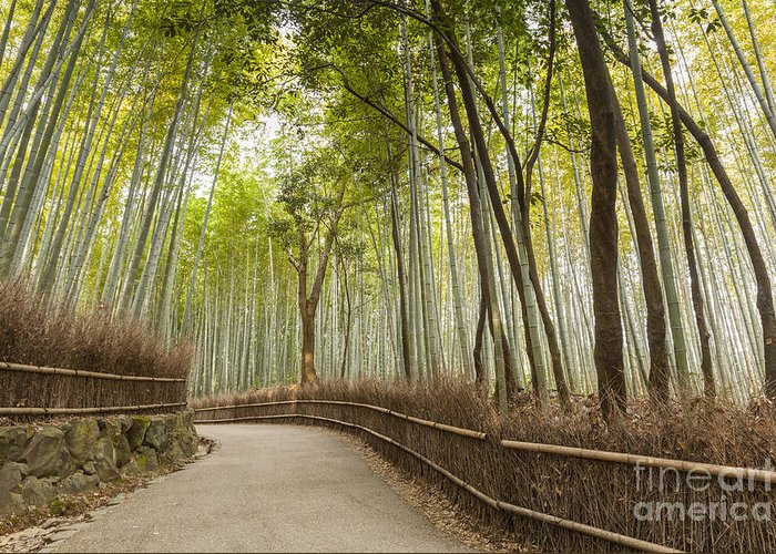 Arashiyama Greeting Card featuring the photograph Bamboo Forest Arashiyama Kyoto Japan by Colin and Linda McKie