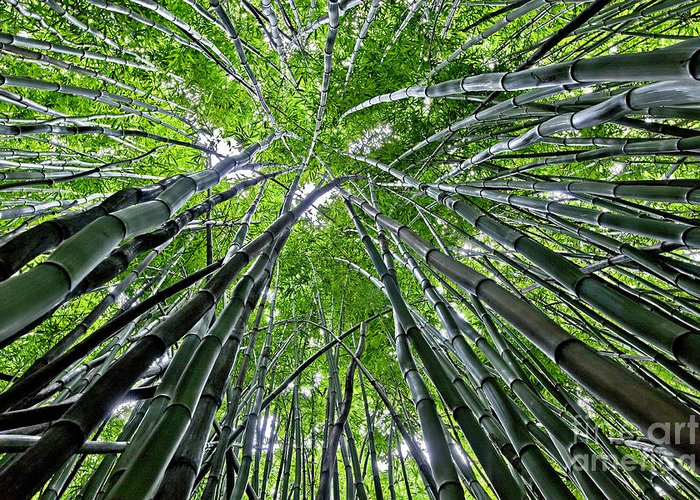 Bamboo Greeting Card featuring the photograph Bamboo Forest by Duke Johnson