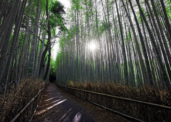 Bamboo Greeting Card featuring the photograph Bamboo Forest Path Of Kyoto by Daniel Hagerman