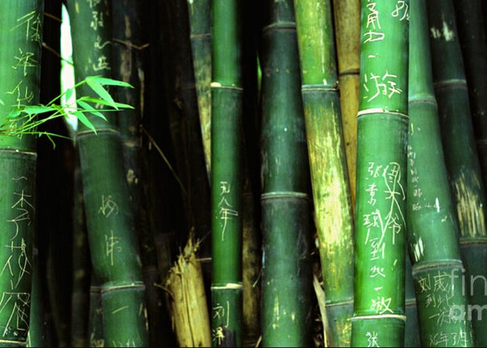 Bamboo Greeting Card featuring the photograph Bamboo Graffiti Pano - Sichuan Province by Anna Lisa Yoder