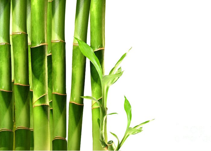 Background Greeting Card featuring the photograph Bamboo Shoots Stacked Side By Side by Sandra Cunningham