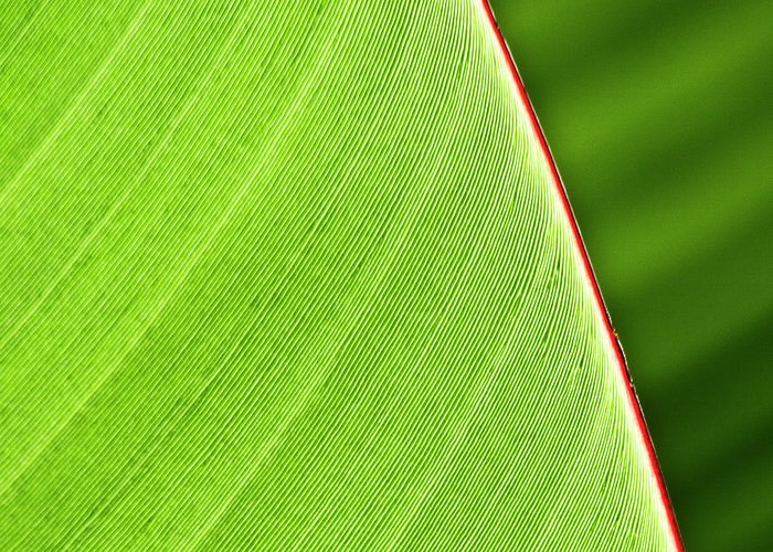 Leaf Greeting Card featuring the photograph Banana Leaf by Heiko Koehrer-Wagner