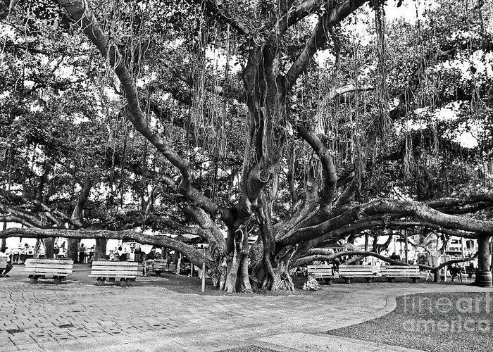Banyan Tree Greeting Card featuring the photograph Banyan Tree by Scott Pellegrin